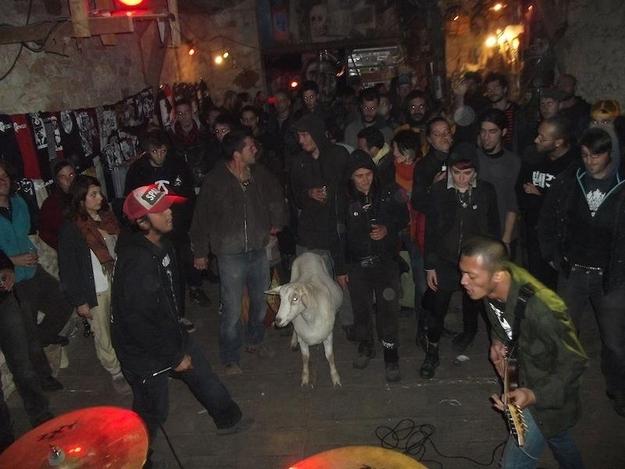 Grind-Goat-4