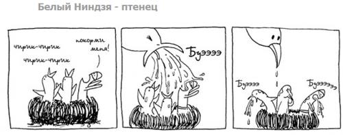 птенец
